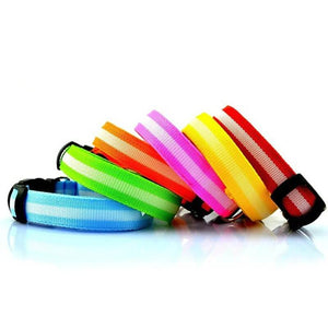 collier lumineux usb chien differents coloris