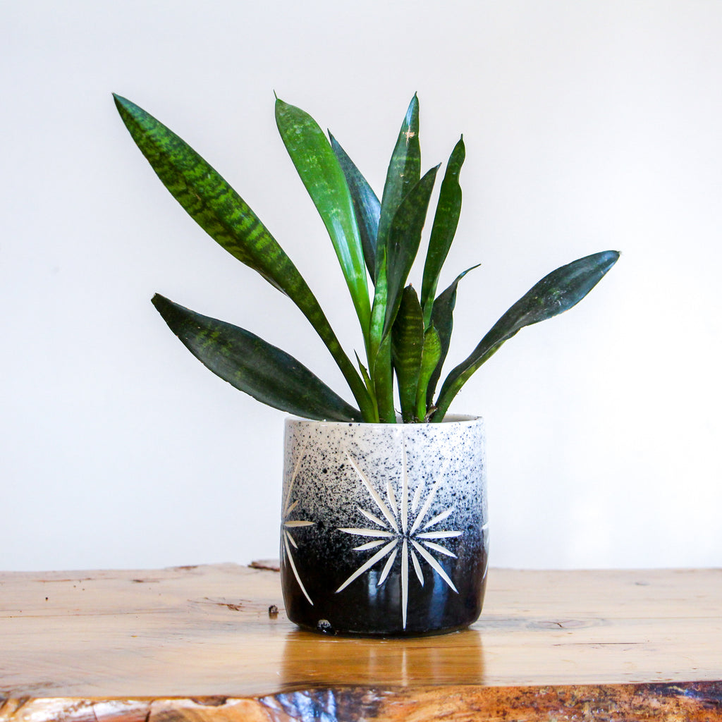 Medium Onyx Fade Deco Planter