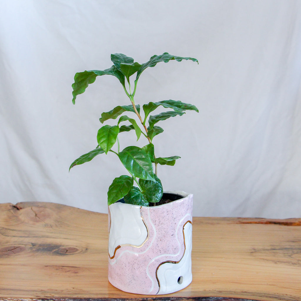 Small Pinched Pink Trail Planter