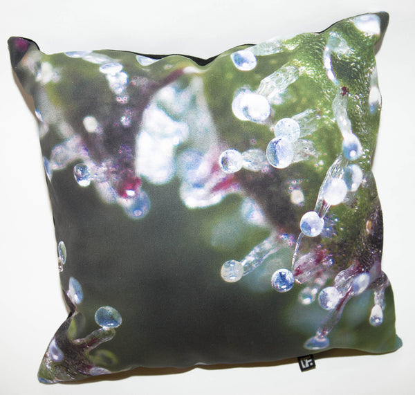 FRANK151 DNA Pillow