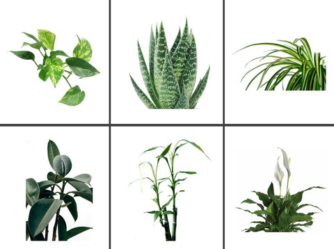 Types of plants that can be used in hydroponic vases