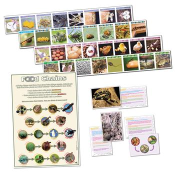 Life Cycle & Food Chains Set