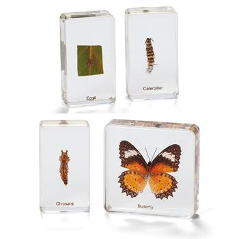 Life Cycle Specimens, Butterfly, Set
