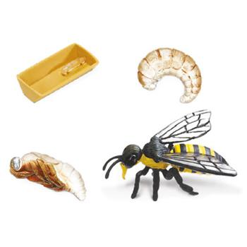 Life Cycle, Honey Bee, Set