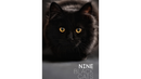 Nine Black Cats by Neema Atri eBook DOWNLOAD