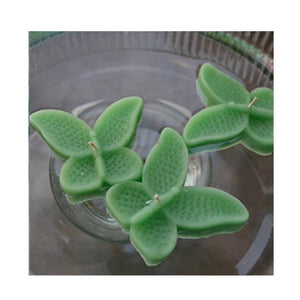 set of eight clover green butterfly shaped floating wedding candles for reception centerpieces