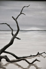 Magic In The Mist: Driftwood, Giclee Print