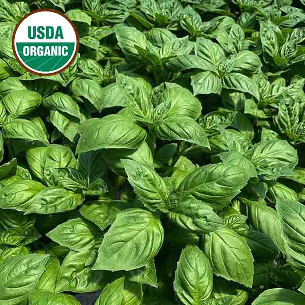 Basil Devotion DMR