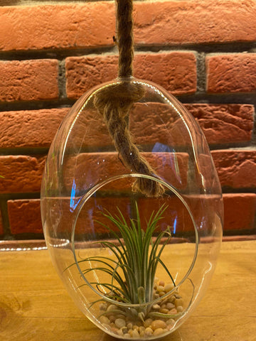 Hanging Egg Shaped Glass Terrariums