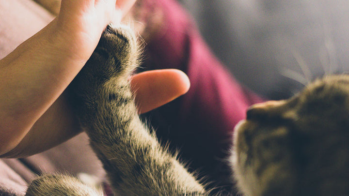 Getting Pet Surfaces Clean - Kitten Paw Touching Human Hand
