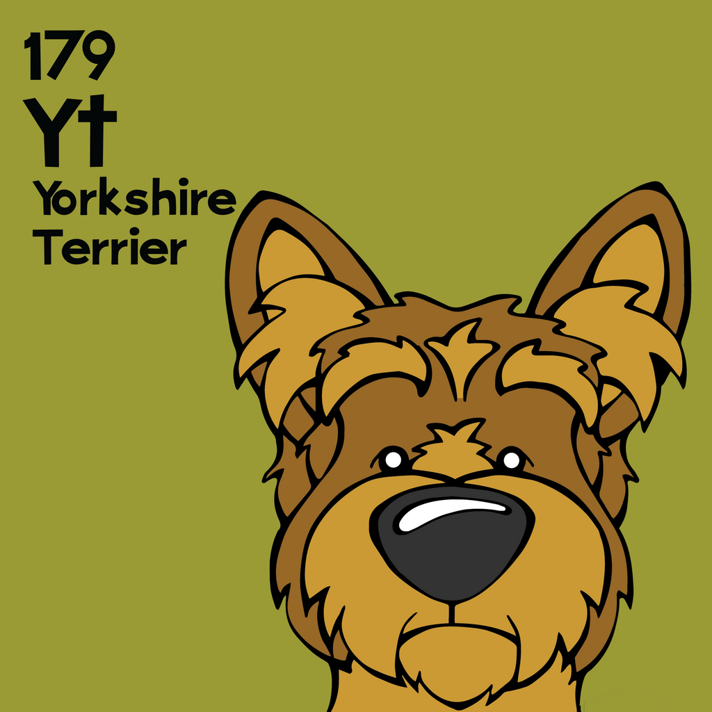 Yorkshire Terrier - Unframed 12x12 Print
