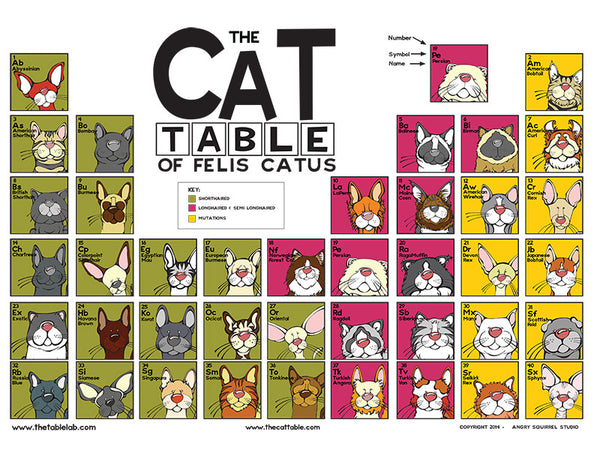 Cats And Dogs At Table