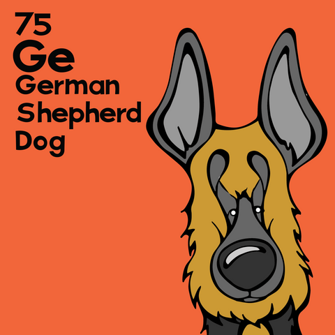 German Shepherd - Unframed 12x12 Print