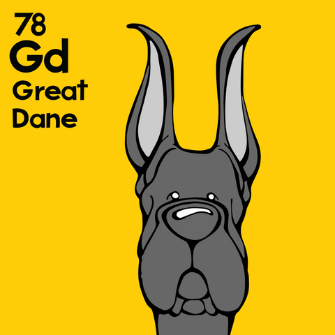 Great Dane (Black, Cropped Ears) - Unframed 12x12 Print