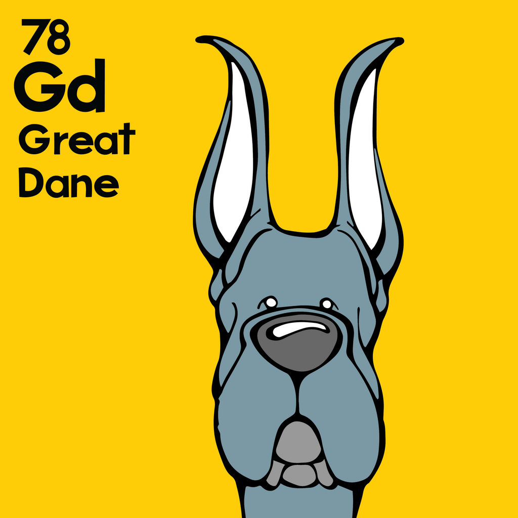 Great Dane (Blue, Cropped Ears) - Unframed 12x12 Print
