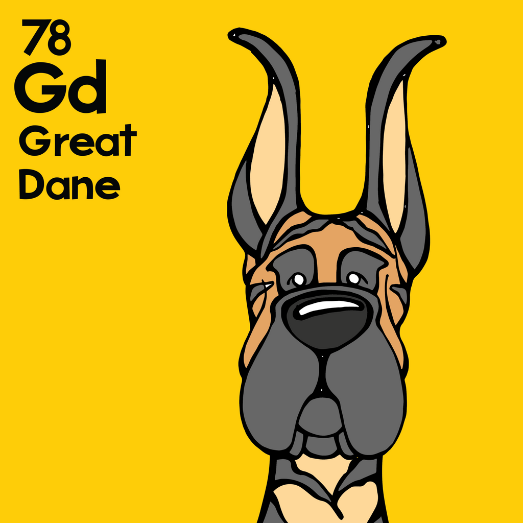 Great Dane (Brindle, Cropped Ears) - Unframed 12x12 Print