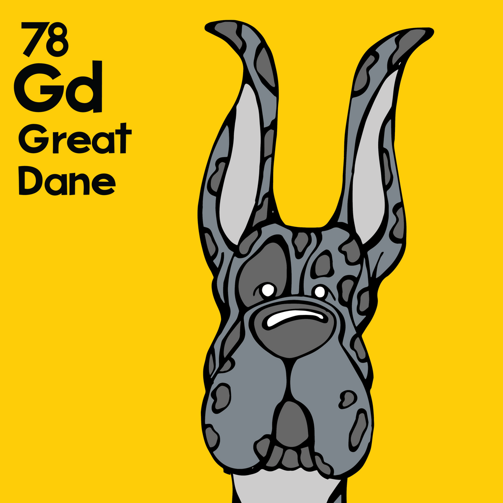 Great Dane (Merle, Cropped Ears) - Unframed 12x12 Print