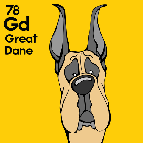 Great Dane (Fawn, Cropped Ears) - Unframed 12x12 Print