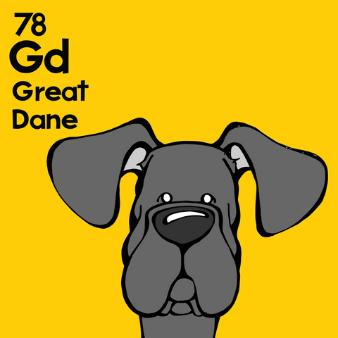 Great Dane (Black, Natural Ears) - Unframed 12x12 Print