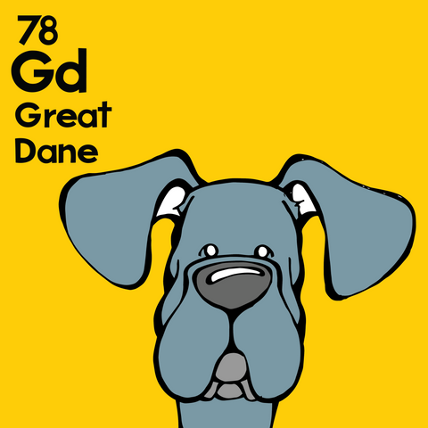 Great Dane (Blue, Natural Ears) - Unframed 12x12 Print