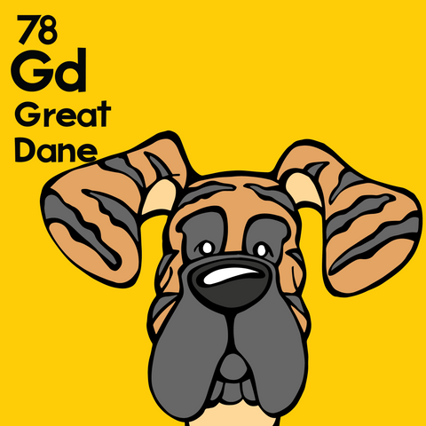 Great Dane (Brindle, Natural Ears) - Unframed 12x12 Print