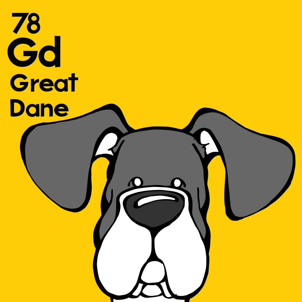 Great Dane (Mantle, Natural Ears) - Unframed 12x12 Print
