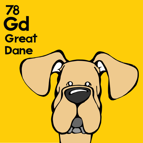 Great Dane (Fawn, Natural Ears) - Unframed 12x12 Print