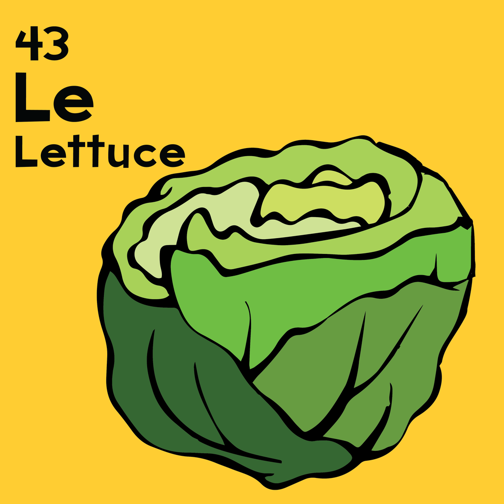 Lettuce - The Food Table - Unframed 12x12 Print