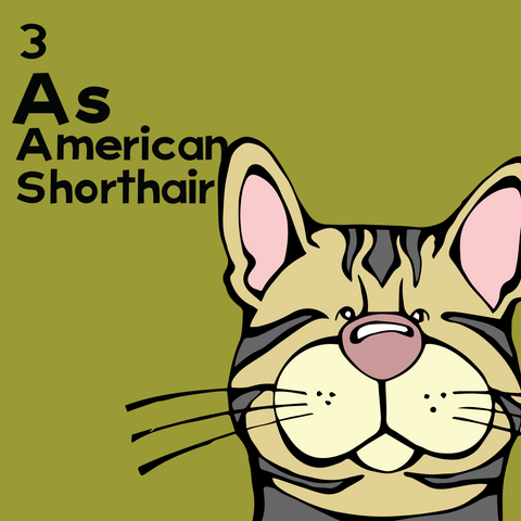 American Shorthair - The Cat Table - Unframed 12x12 Print