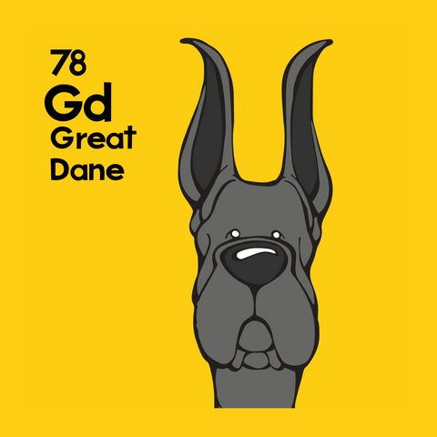 Black Great Dane Cropped Ears Pillow