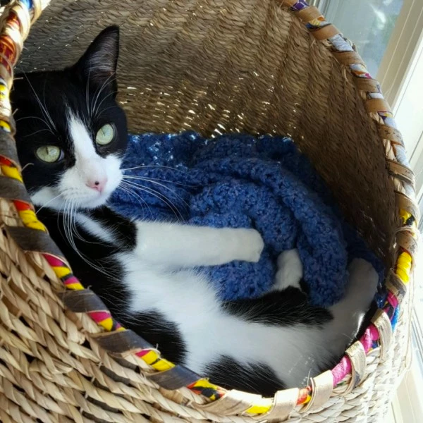 Cat Basket with Pad