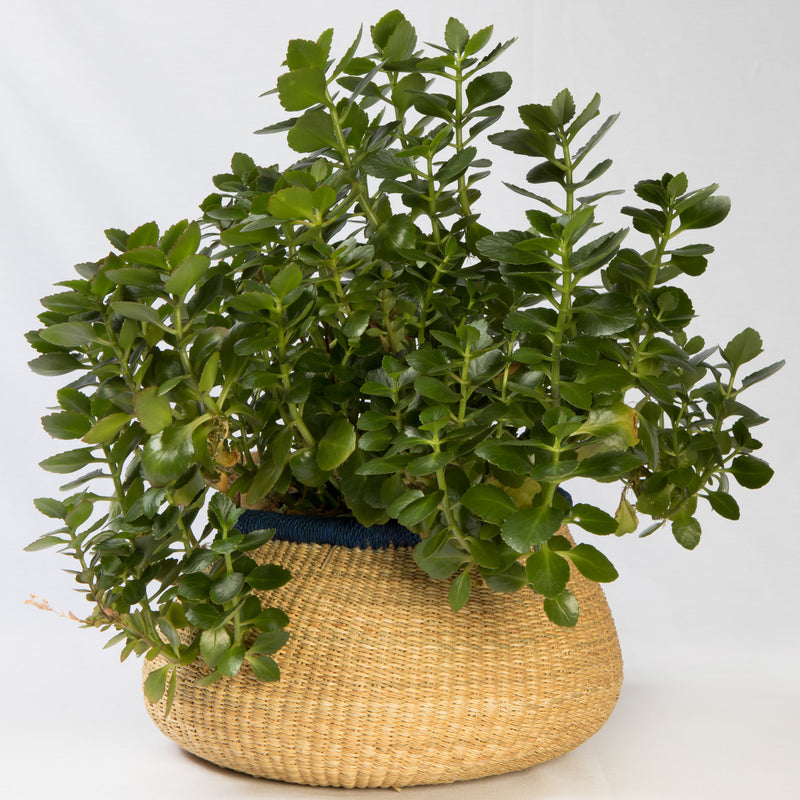 Asungtaba Mini Pot Basket