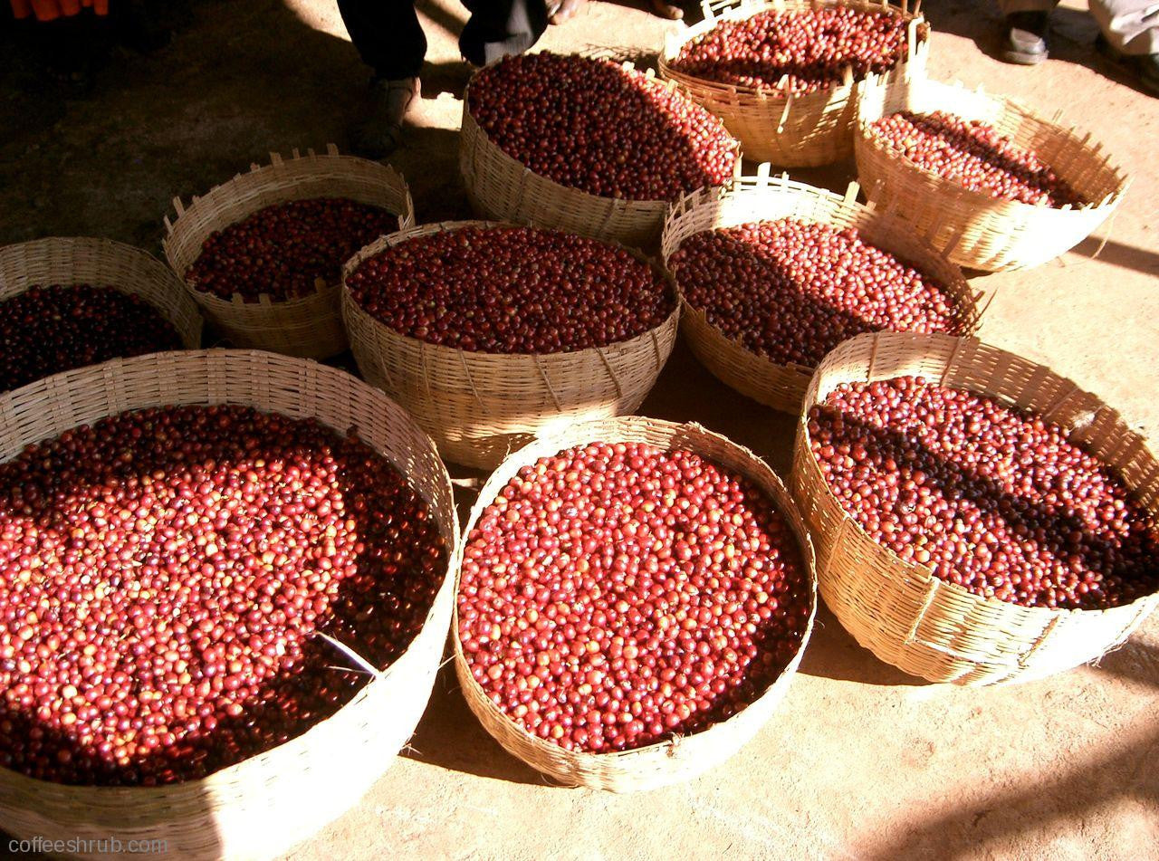 Ethiopia;  Konga -Yirgacheffe - Natural - Eternity Coffee Roasters