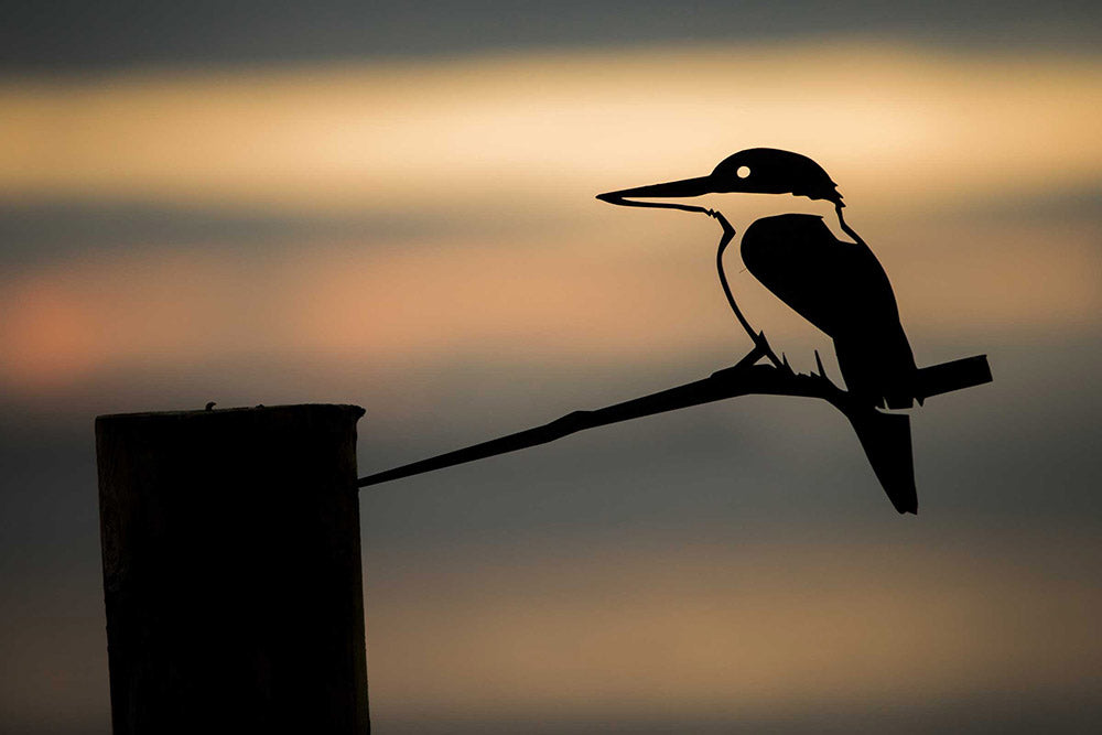Kotare / Kingfisher - Large