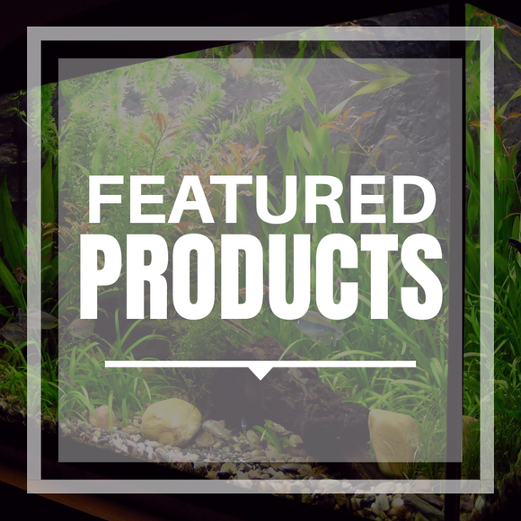 Our Favorite Featured Products