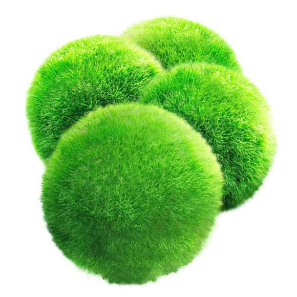3 Marimo Moss Balls for Biological Filtration in Your Tank