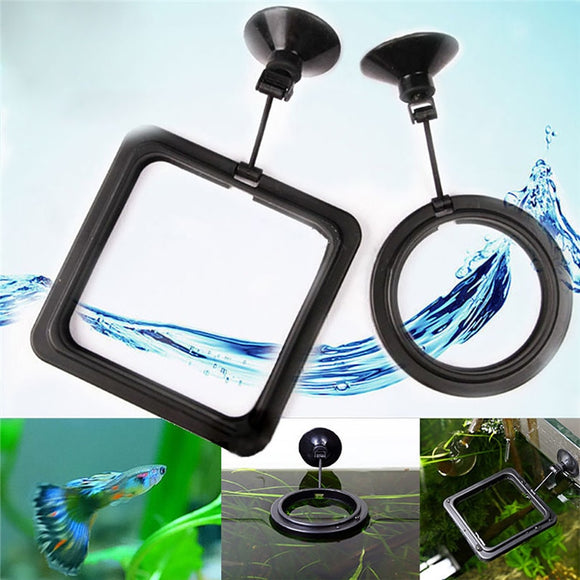 Floating Fish Feeding Rings (Black)