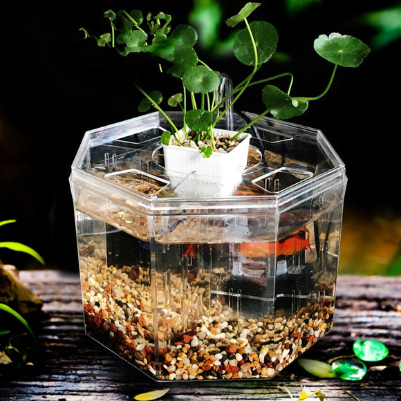 Split Betta Fish Tank w/ Plant Basket