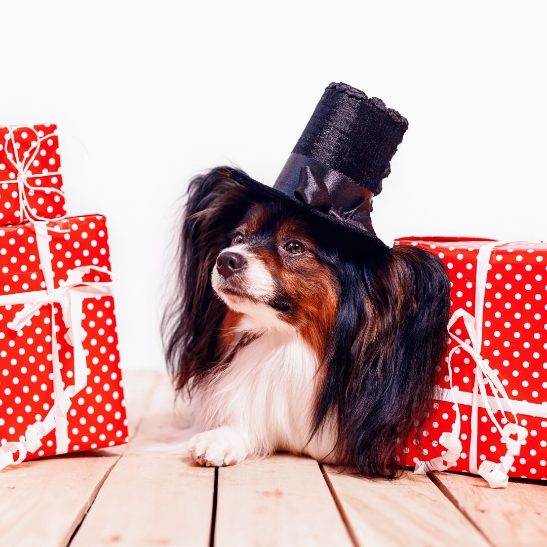 8 Best Gifts for Dog Lovers