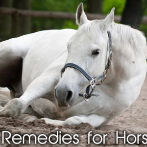 How To Find The Right Home Remedies for Horses