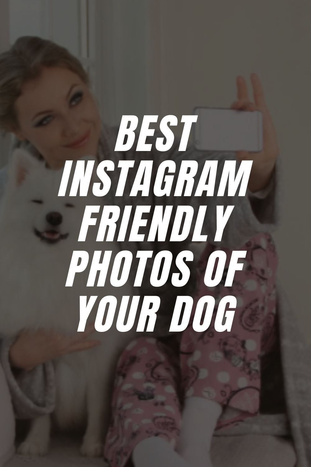 Best Instagram Friendly Photos Of Your Dog