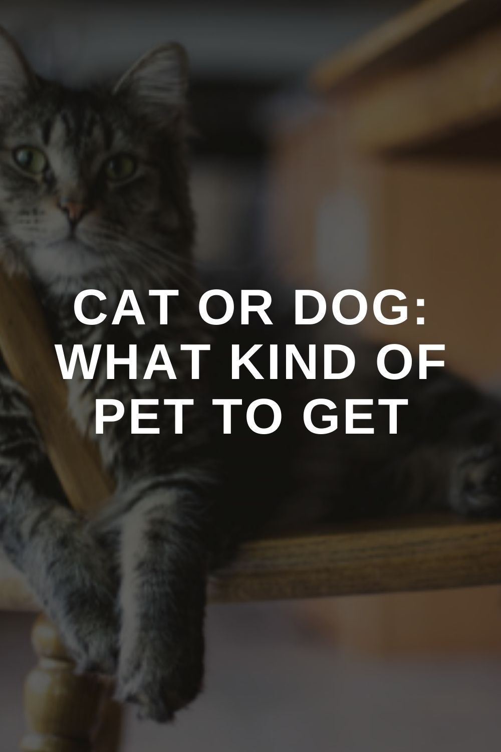 Cat or Dog: What kind of Pet to Get
