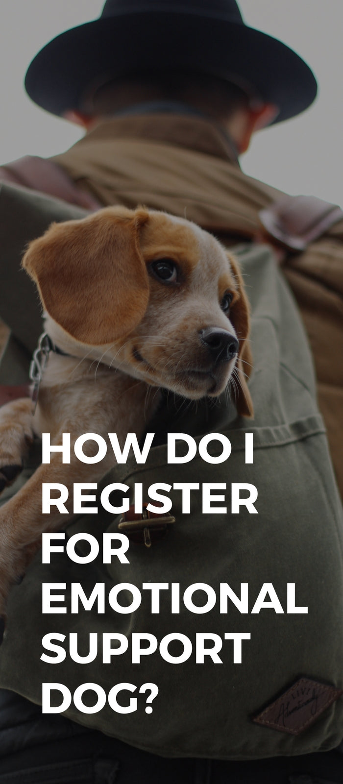 How Do I Register For Emotional Support Dog?