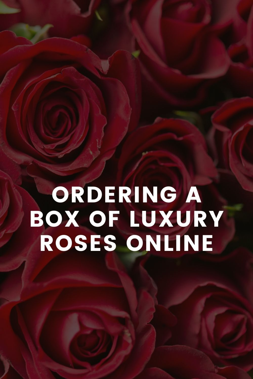 Ordering a Box of Luxury Roses Online