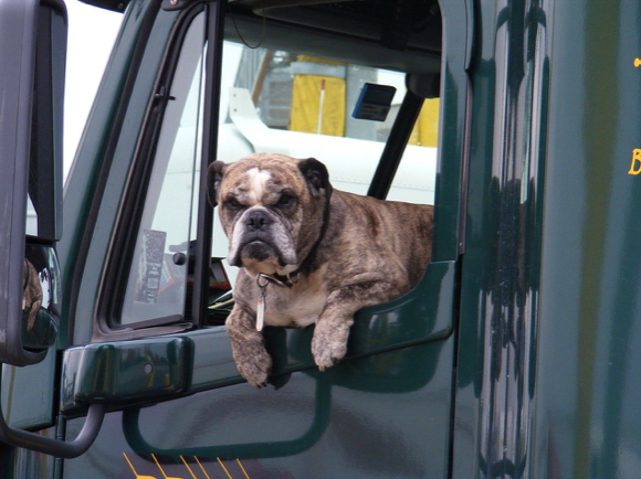 An Article About How To Transport a Dog