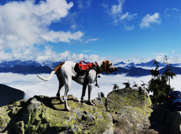 How to Equip Your Dog for Hiking?