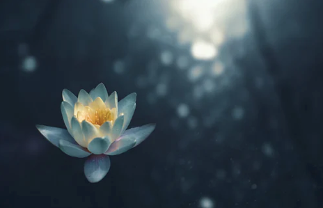 Things to Consider When Creating Meditation Spaces In and Around Your Home