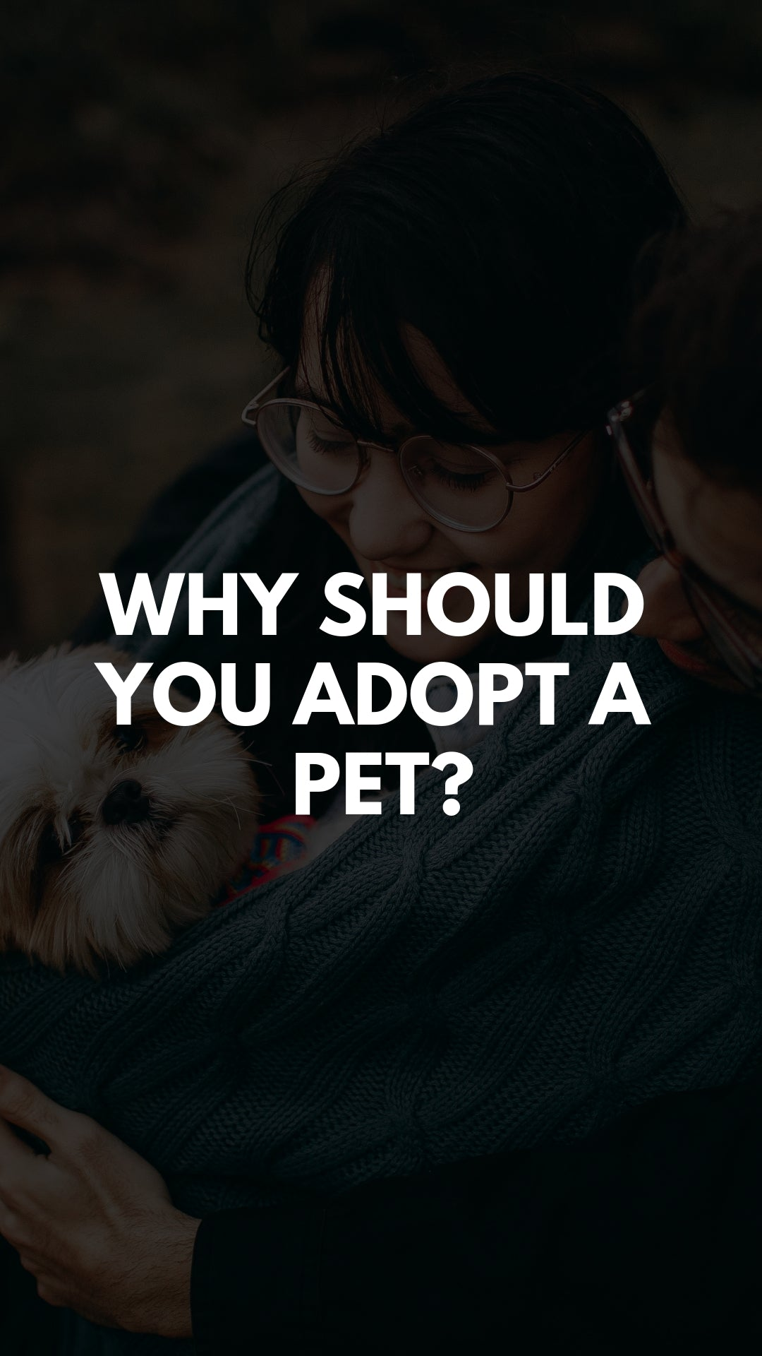 WHY SHOULD YOU ADOPT A PET?
