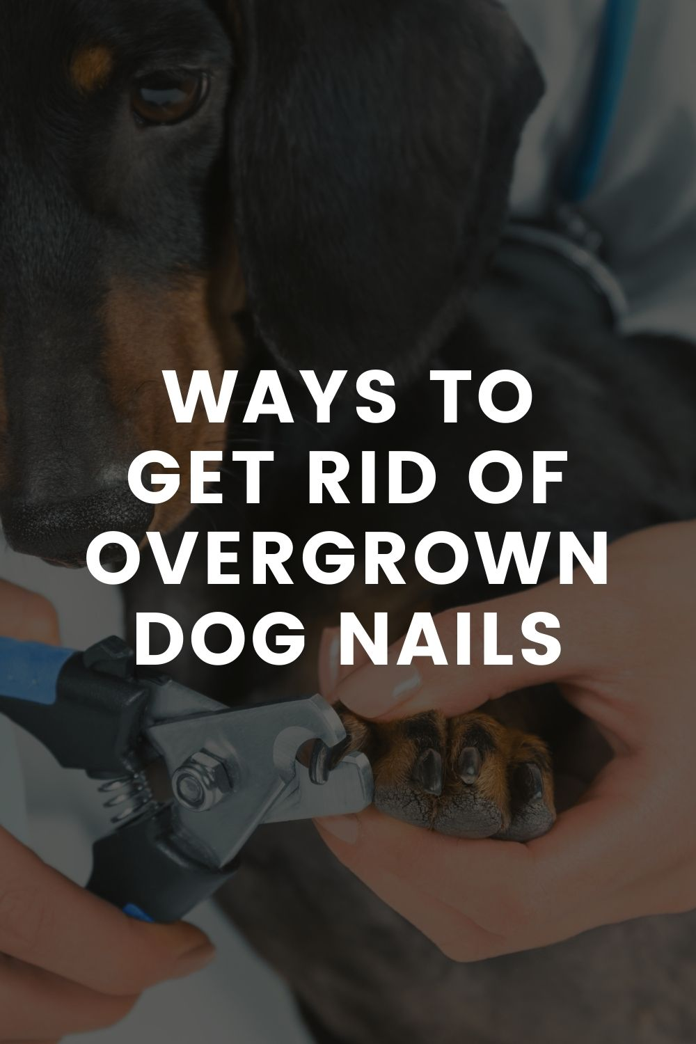 Ways to Get Rid of Overgrown Dog Nails
