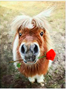 Poney avec rose rouge - Broderie de Diamants